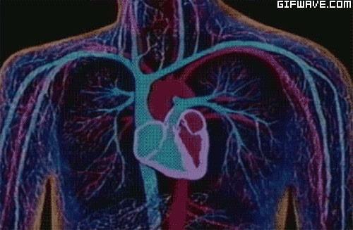 나쁜 콜레스테롤 저하 및 혈관 보호
